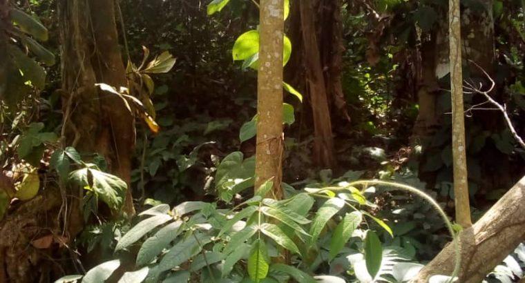 OFFRE PLANTES NATURELLES HERBES REGLES DOULOUREUSE