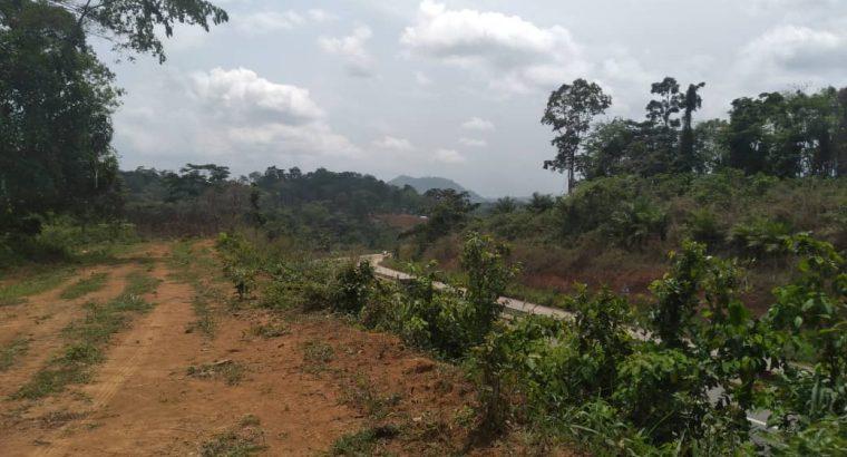 Y037MMT07 TERRAIN A VENDRE AU CAMEROUN/ YAOUNDÉ